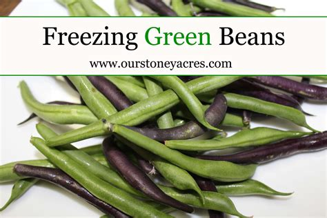 freezing fresh green beans 28 images how do you freeze fresh green beans delishably
