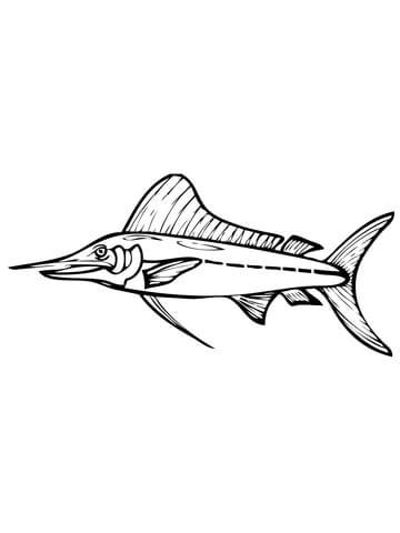marlin fish coloring pages gallery blue marlin coloring pages
