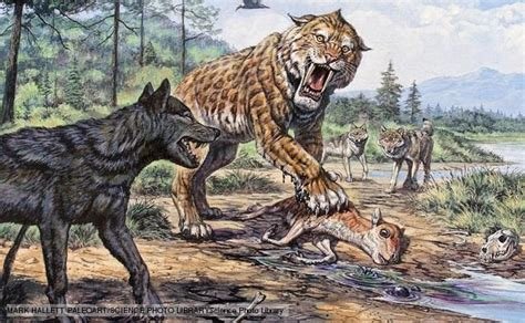 dire wolf white wolf 11 fascinating facts about the dire wolf canis dirus quot fearsome quot