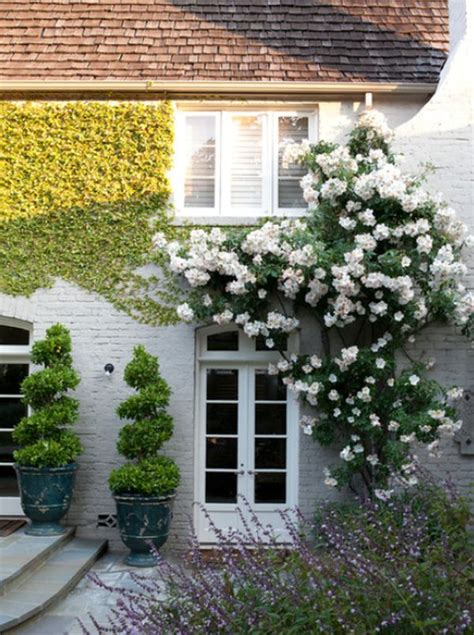 Wall Climbing Plants For Your Garden Climbing Plants That Give Your Home A New Look