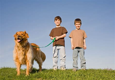 how often to walk a how often should you walk your all for dogs pet services