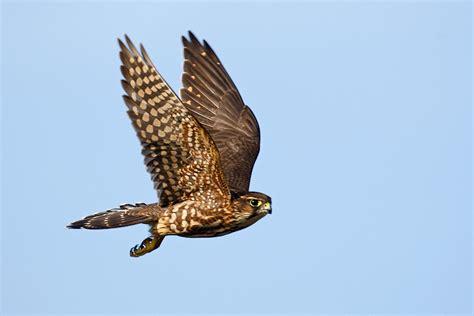 assorted birds of prey in flight birds in photography