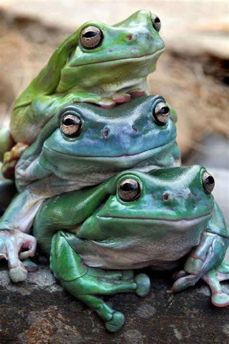 Topi Okkey 100 foto hewan lucu dan imut yang siap akan menghiburmu tingkahnya gokil