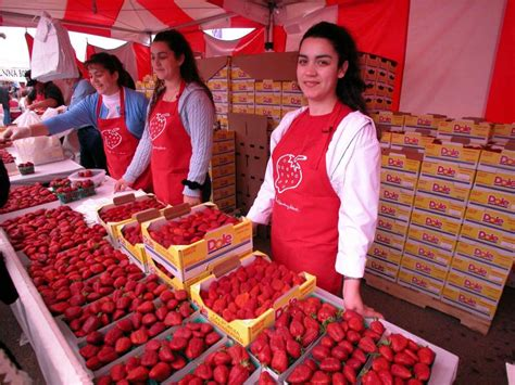 Strawberry St3 california strawberry festival 2017 is coming to town la jaja