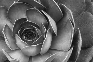 succulent in black and white photograph by ben and raisa
