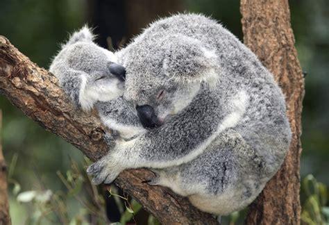 imagenes animales abrazados las 10 fotos m 225 s tiernas de animales abraz 225 ndose fotograf 237 a
