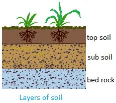 layers of the soil diagram ms raino s science classroom