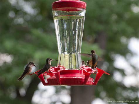 How Often Change Hummingbird Feeder hummingbird feeders hummingbird pictures