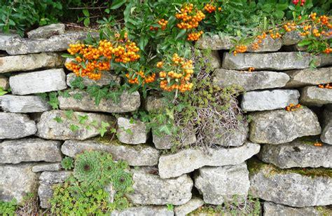 steingarten anlegen gestalten ideen bilder beispiele