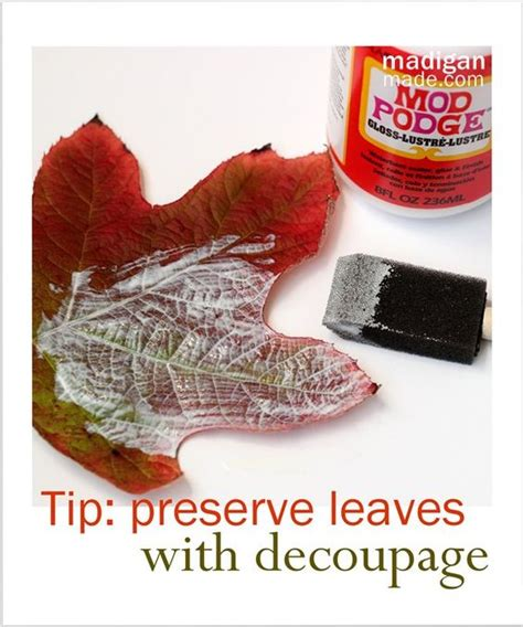 decoupage with leaves fall leaves preserve and leaves on