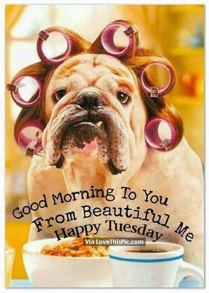 good morning    beautiful  happy tuesday
