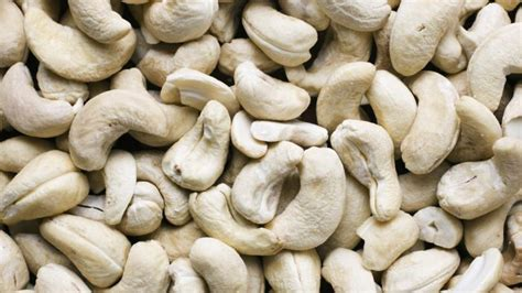 dogs cashews are cashews poisonous to dogs reference