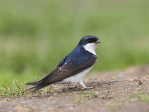 Homes And Interiors Magazine the house martin saga