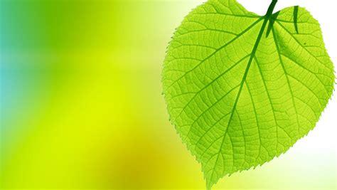 imagenes de naturaleza verdes fondos de pantalla en gran plano follaje verde naturaleza