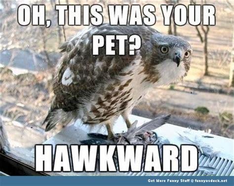 Funny Bird Memes - bird selfie funny bird meme