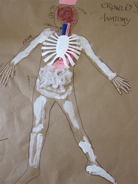 human crafts for human anatomy craft for pattern me