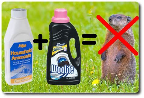 how to get rid of a groundhog in my backyard cosmological cabbage july 2012