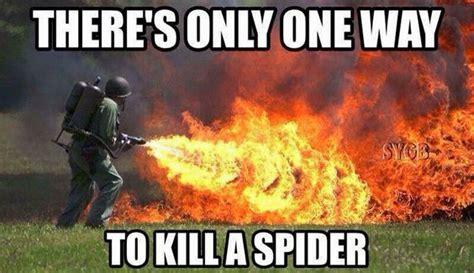 Killing Spiders Meme - pinterest the world s catalog of ideas