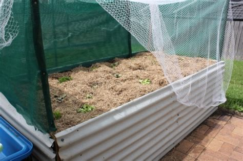 Raised Vegetable Garden Beds Corrugated Iron Raised Vegetable Garden Beds Corrugated Iron Best Idea