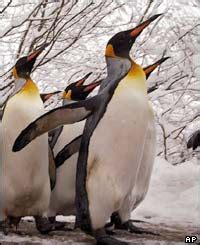 Pinguin Setbie news in depth photo gallery in pictures europe s cold spell