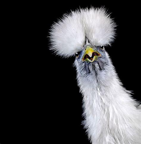 10 Amazing Portraits Of Animals by The Astonishing Animalia Photo Series By Ernest Goh Yatzer