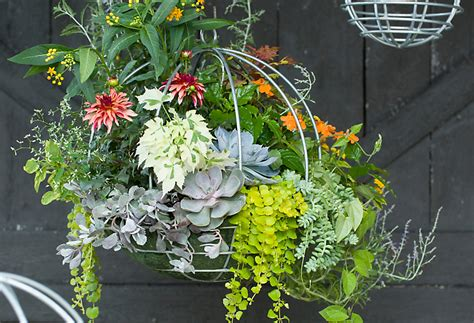 simple tips for hanging baskets the blog at terrain