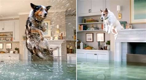 flooded house dogs participate in hilarious olympic style diving competition in flooded house