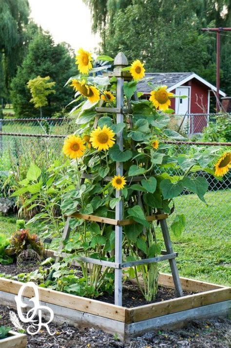 fall gardening ideas 11 fresh ideas for fall gardens