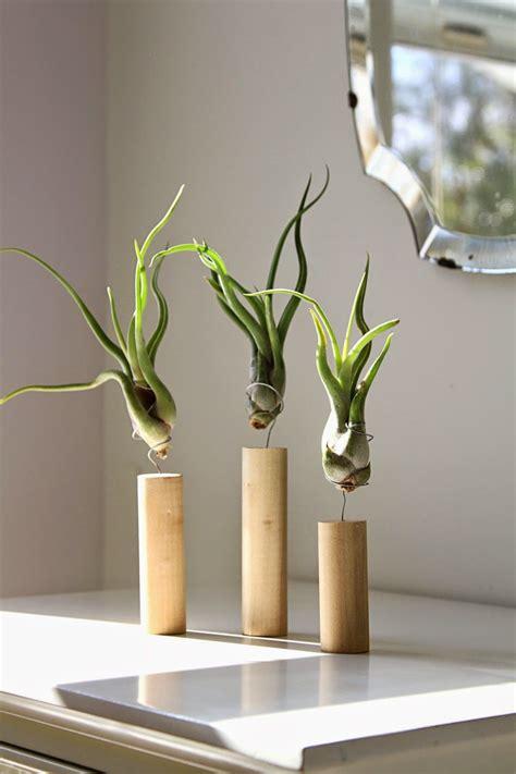 catsas de pelicula tillandsias plantas aereas