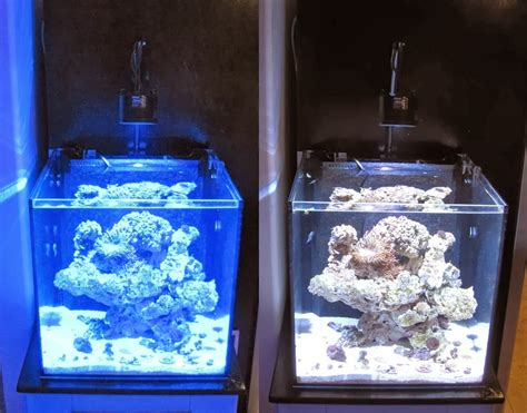 Kessil Lights by Kessil A360we Say Goodbye To Your Metal Halides Marine