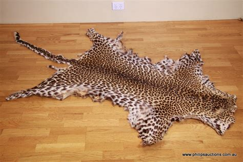 skin for sale taxidermy for sale in melbourne