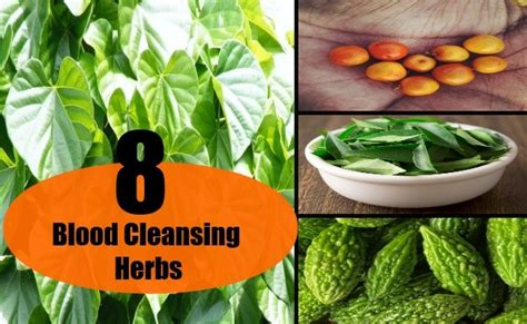 Herbs For Blood Detox by 8 Blood Cleansing Herbs Best Blood Cleansing Herbs