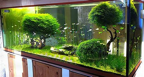 aquascaping shop kundenaquarien aquascaping shop f 252 r naturaquarien