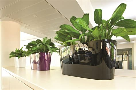 artificial  preserved plants