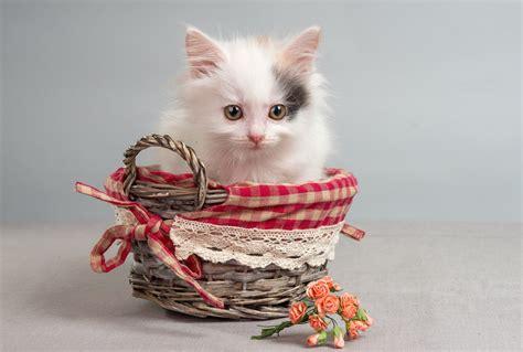 Keranjang Kucing kertas dinding keranjang bunga mawar kucing 2560x1726