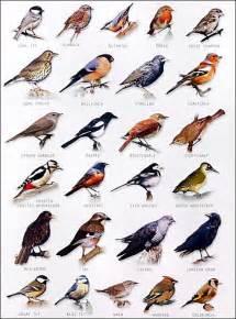 25 best ideas about birds on beautiful birds