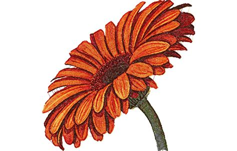 designs free gerbera photo stitch free embroidery design free