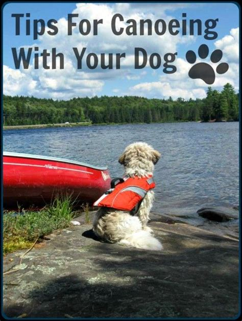 canoeing with dogs tips for canoeing with your