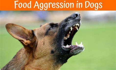 food aggression in dogs guide to prevent food aggression in dogs 2017 us bones