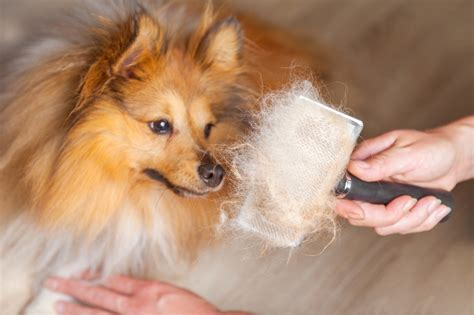 why dogs shed manage shedding in dogs