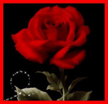 imagenes para perfil flores rosas bonitas de amor im 225 genes de facebook postales