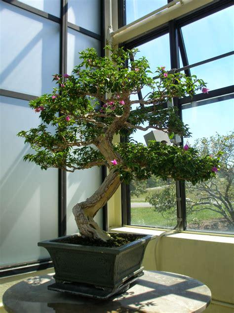 best indoor tree the best indoor trees