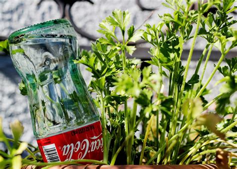 Self Watering Pot Seri Vienna reuse glass bottles as watering globes for your plants make