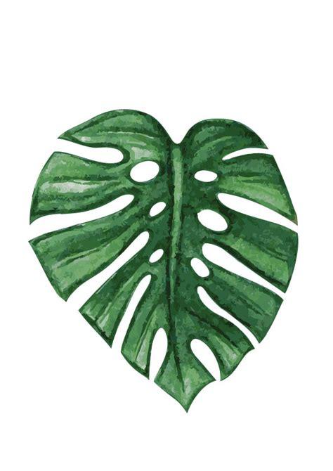 Leaf Print monstera leaf print rachelle rachelle