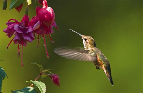 wild birds unlimited how to get ready for hummingbird season