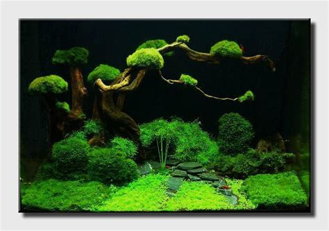 aquascape world aquascape of the month september 2009 quot bonsai garden