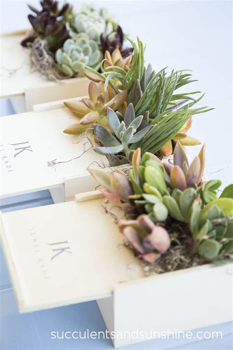 succulents in spain succulent centerpieces for a corporate event succulent arrangements and the o jays