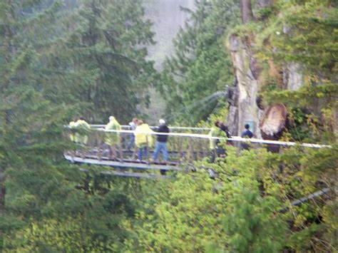 vancouver swinging bridge capilano swinging bridge picture of capilano suspension