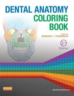 anatomy coloring book barnes and noble dental anatomy coloring book edition 2 by margaret j