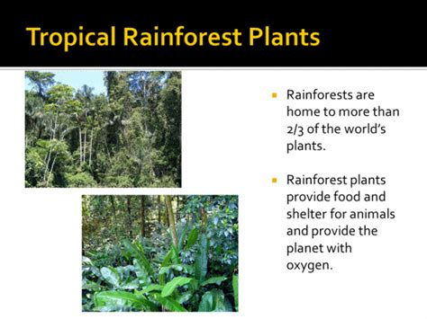names of plants in the tropical rainforest names of different ecosystems add two or more images of
